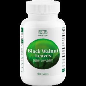 Black Walnut Leaves Czarny orzech